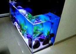 Designer aquariums in India