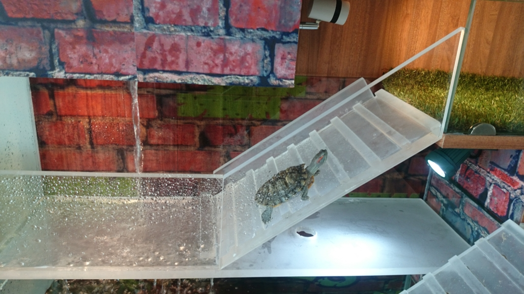 how to change turtle tank water